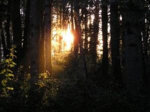 The light of God shines through