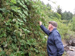 Sampling the blackberries
