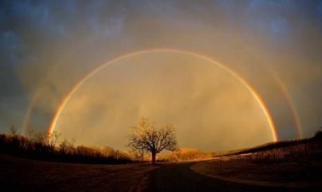 Rainbow tree - posted by Micha Jazz