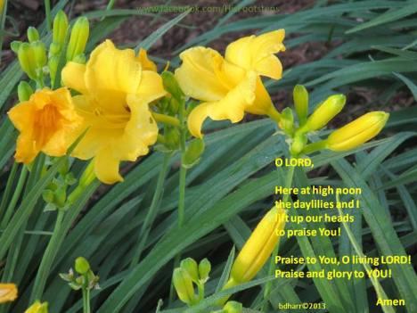 Praying with daylilies