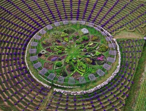 Cherry Point Farm labyrinth