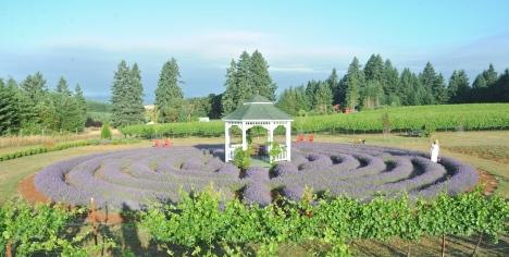 Labyrinth Tebri Vineyards Oregon